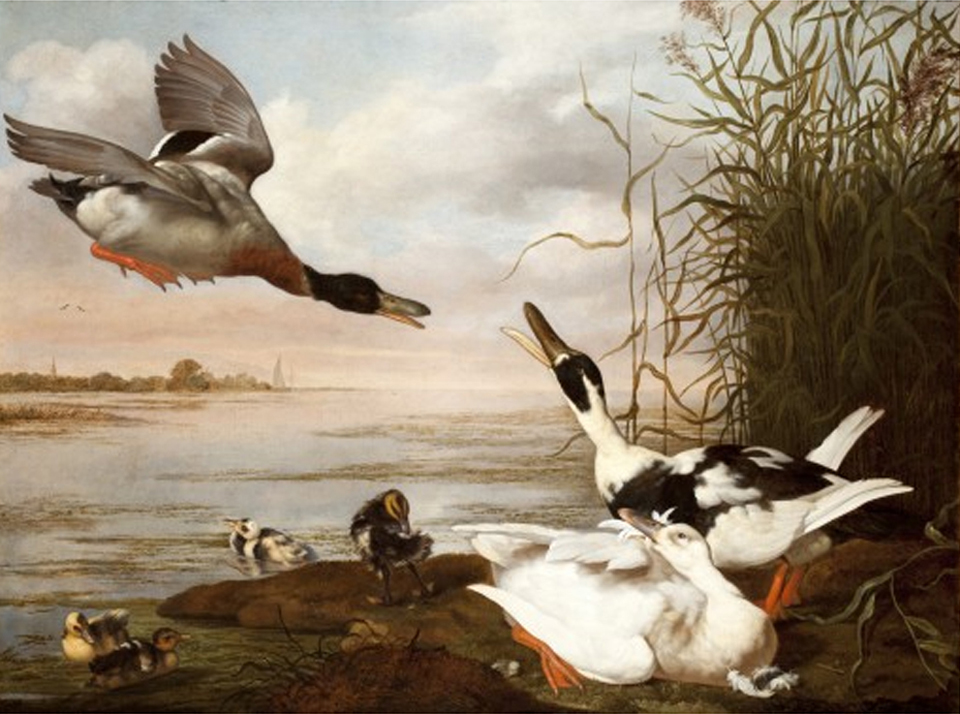 Picture of 'Ducks at a lake' showing the pied and magpie pattern. Johannes Spruyt Amsterdam 1628 – 1671